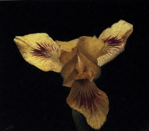 Yellow+Iris+on+Black+Background+11.5x13.5
